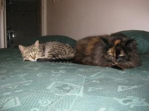 Naše dvě kočky